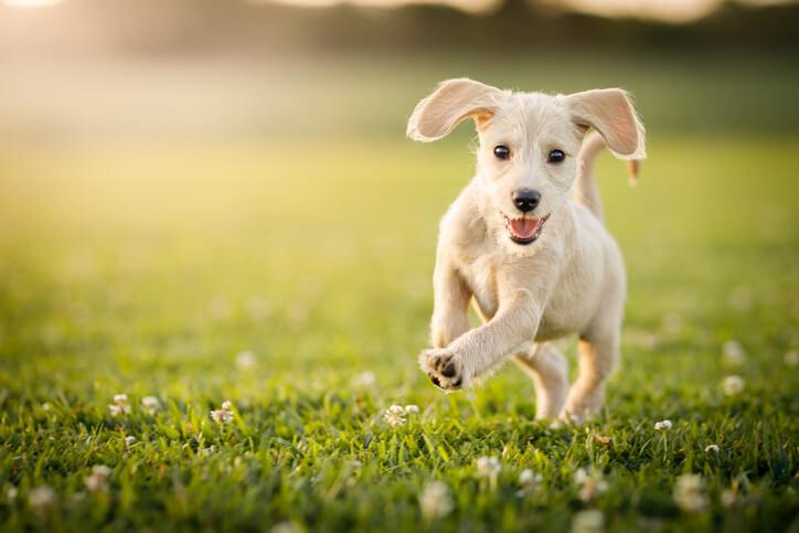 4 Dog Parks Close To The University Of Florida