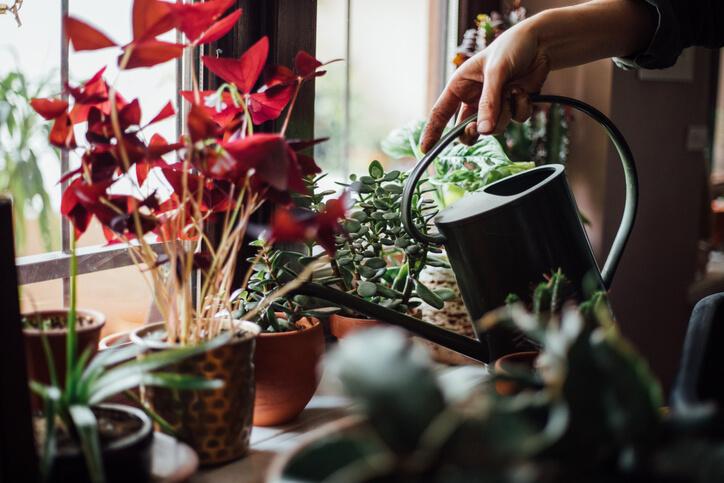 6 Best Indoor Houseplants